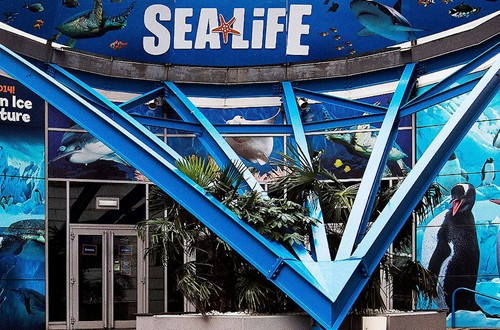 Image of Sealife Centre